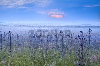 early blue misty morning