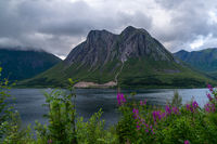 picturesque fjord and mountain landscape with lilac flowers in the foreground