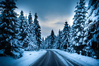 Driving through a natural calm winter fairytale