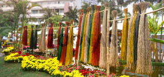 Decorations for Lunar new year flower market. Panorama