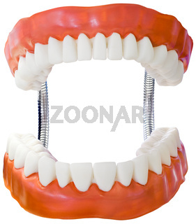 Denture Model Cutout