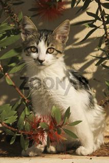 Katze im Busch