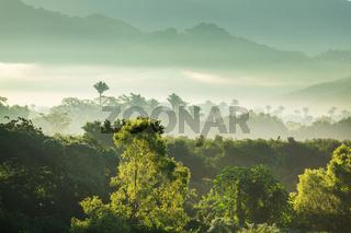 Jungle in Mexico
