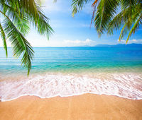 Green leaves of  Palm tree and tropical beach