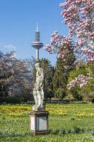 FRANKFURT AM MAIN, GERMANY - 2 April 2021- Statue des Pluto vor einem blühenden Magnolienbaum im Palmengarten und dem Fernsehturm im Hintergrund