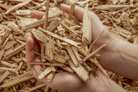 check wood chips