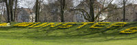 Sign Muenster of blossom Daffodil,  Muensterland Nordrhein-Westfalen, Deutschland, Europa