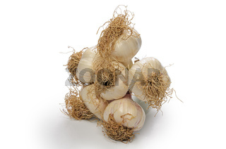 bunch of heads of garlic on white background with soft shadow
