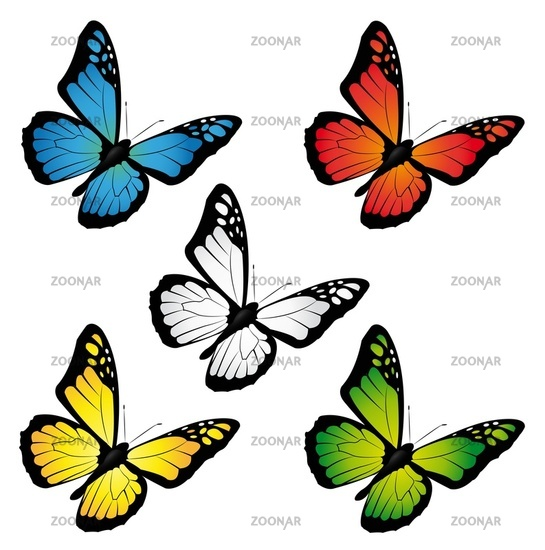 butterflies in different colours
