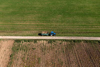 Aerial view at a potatoe harvesting tractor, with lots of potatoes stacked up.