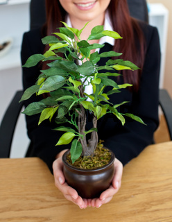 Close-up of a caucasian businesswoman holding a plant