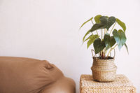 home interior with house plant and sofa against bare wall
