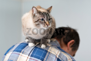 devoted cat sitting on a man's back