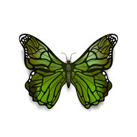 Green detailed realistic butterfly isolated on white