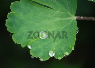 Regen, Blatt mit Tropfen