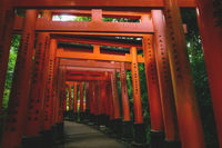Tunnel of orange torii gates at Fishimi Inari Taisha shrine in Kyoto, Japan