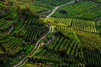 a way through the vineyard in Alsace