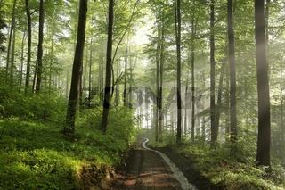 Path through spring forest