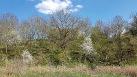 Riparian landscape on the Tegeler Fließ in Schildow in the state of Brandenburg in springtime