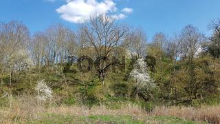 Auenlandschaft am Tegeler Fließ in Schildow im Land Brandenburg im April