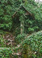 Wayside cross grown in ivy, in Lauter valley, swabian alps,