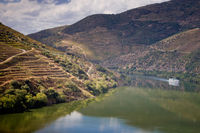 Vineyards of the Douro Valley, Portugal