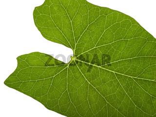 green macro leaf