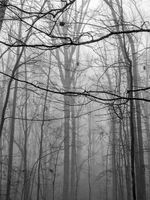 foggy morning in the forest in monotone