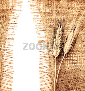 Wheat border