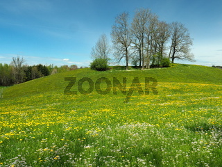 Frühlingswiese im Westallgäu bei Karsee, Wangen im Allgäu