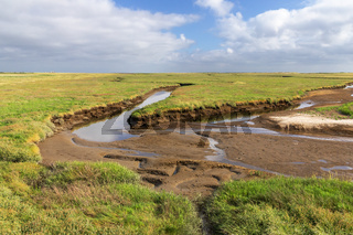 Salzwiese mit Priel bei Niedrigwasser bei Sankt Peter-Ording