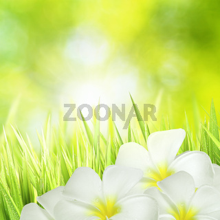 Green grass and white flowers
