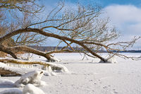 Trees on the frozen lake Barleber See near Magdeburg in winter