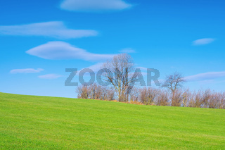 Baumgruppe im Herbst mit Wolken - grove of trees in autumn with clouds