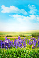 Purple flowers in tall grass against a summer sky