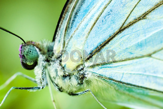 close up blue butterfly
