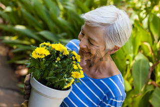 High angle view of smiling senior woman smelling yellow flowers