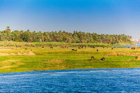 Landscape view of large river nile in Egypt