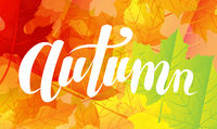 Autumn Lettering Text With Leaves