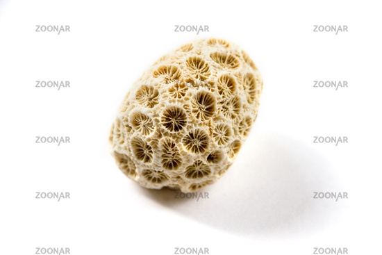 Dry coral on a white background
