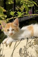 kitten in the sun