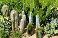 Cactus garden, variety of mini cacti -