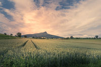 View over a wheat field to the Hegauberg Hohenstoffeln, Baden-Wuerttemberg, Germany
