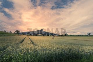 Blick über ein Weizenfeld auf den Hegauberg Hohenstoffeln, Baden-Württemberg, Deutschland