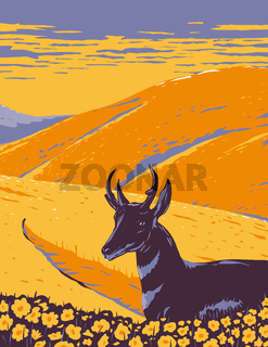 Pronghorn and Wild Flowers Growing in Native Grassland of Carrizo Plain National Monument in San Luis Obispo County California WPA Poster Art