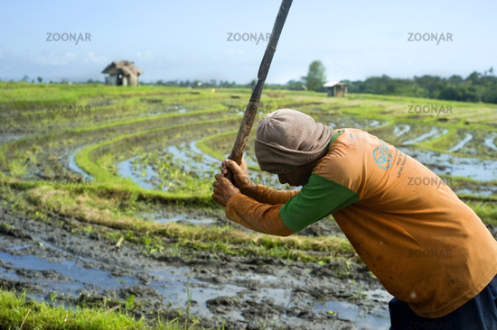 Rice field worker
