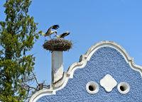 Weissstorch (Ciconia ciconia) landet auf einem Storchennest auf einem Burgenländer Bauernhaus mit Barockgiebel