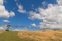 Irrigation in landscape