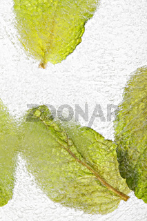 Ice with frozen mint