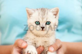 Human hands holding little cat